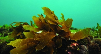 iss33-seaweed-slide