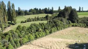 riparian_plantings_ecosystems