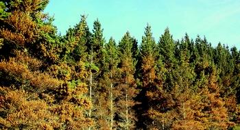 RNC_trees_v2.jpg