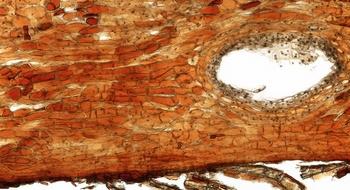 iss32-bark slide