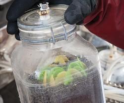 Bioplastics jar