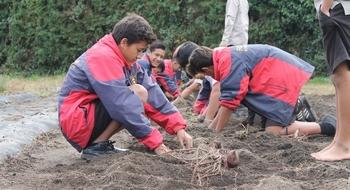 kumara planting slide