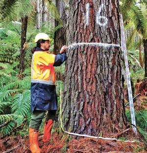 AR16 - tree measuring