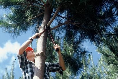 Workshop pruning