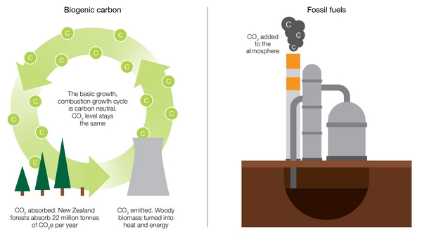 Carbon cycling diagram