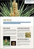 Pine pollen cover